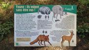 Ce que les Oloronais souhaitent voir en forêt du Bager d'Oloron-ACCOB