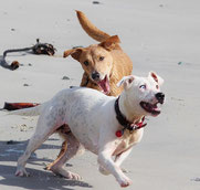 Le chien et le jeu