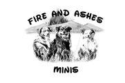 Zucht Mini Aussie Mini American Shepherd NRW