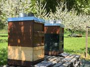 Buckfast Bienenvölker