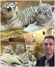 Magic Dominik und weiße Tiger