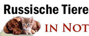 www.russische-tiere-in-not.de