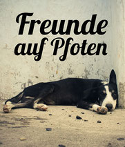 www.freunde-auf-pfoten.de