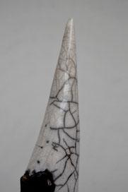 Tibiae nigra (2014)
