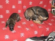 Mit Tieren sprechen - Foto Weggefährten Simba und Chiara