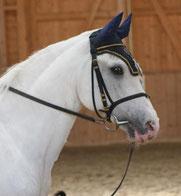 Mit Tieren sprechen - Foto Pferd Wendel
