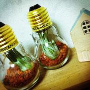 DIY 植物 電球