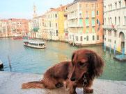 ヴェネチア大運河(2歳)