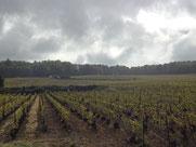 The Grand Cru vineyards of Le-Mesnil-Sur-Oger