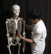 te.a.teの院長と骨模型