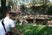 Зоопарк Барселоны. Туманное будущее
