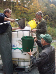 Hege und Pflege der Vereinsgewässer: Besatzmaßnahmen in der Wehra