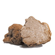 Der (teurere) weiße Trüffel (tuber magnatum) verfügt über einen intensiven Geruch sowie einen dezenten Geschmack. Die Albatrüffel wird nur zwischen Oktober und Ende Dezember geerntet und verträgt keine Hitze, weshalb man ihn ganz zum Schluss über die