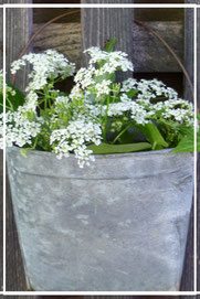 Tolle Blumenarrangements im Laden von Sternschnuppe home & garden in Eichelhardt, Goldwiese 7, 57612 Eichelhardt