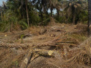 Land für Brunnenbau in Kibissir