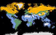 Karte zur weltweiten Verbreitung der Schnepfenvögel
