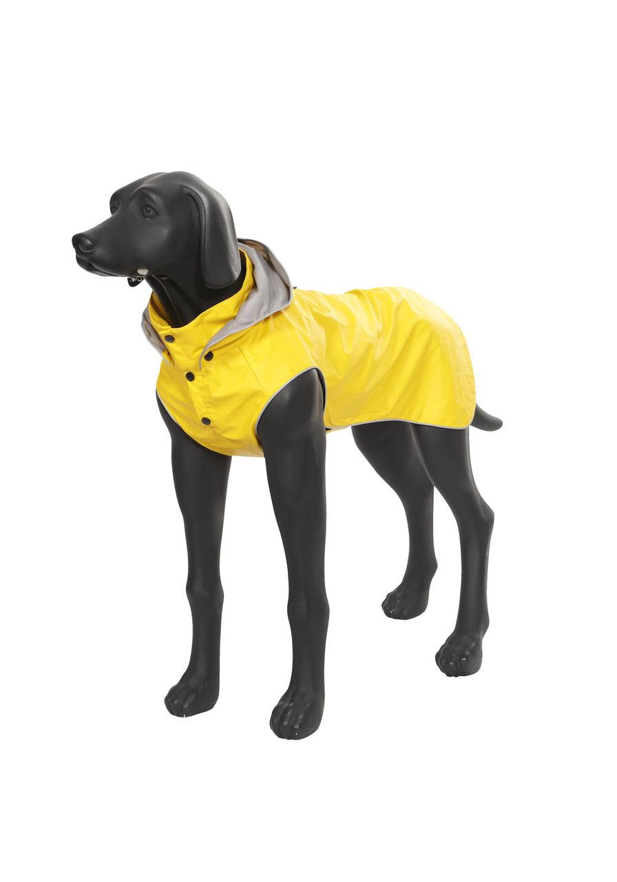 Friesennerz Hund
