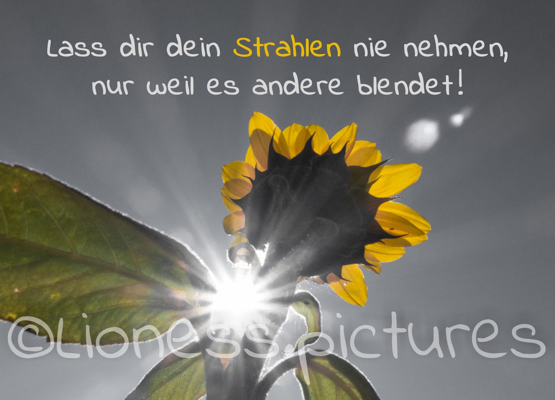 Sprüche / Aufmunterung - Lioness.pictures Webseite