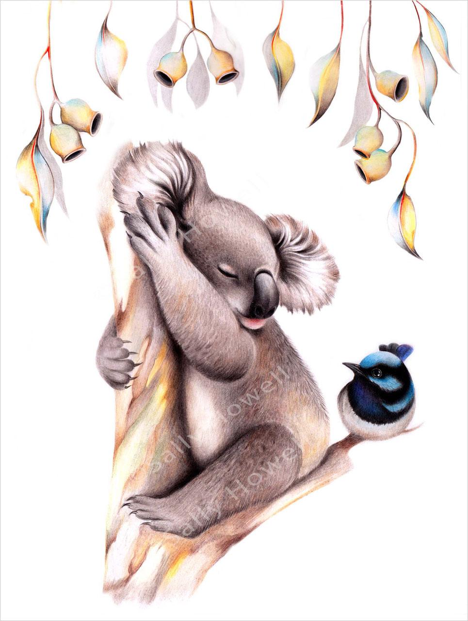 Middle Of Nowhere Koala Print On Canvas Modern Homewares Buy