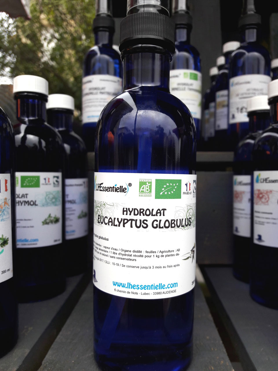 hyd eucalyptus globulus huiles essentielles bio l 39 hessentielle 100 pures et naturelles. Black Bedroom Furniture Sets. Home Design Ideas