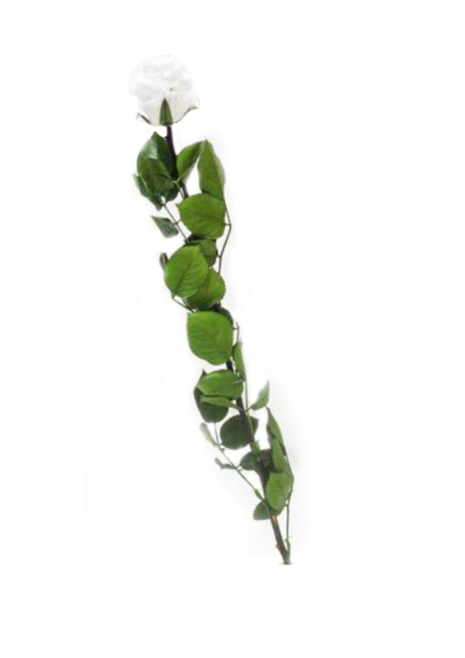 rose tige vegetal indoor mur v g tal stabilis. Black Bedroom Furniture Sets. Home Design Ideas