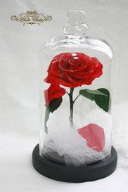 ディズニー 美女と野獣 一輪の薔薇 ガラスドーム プロポーズ フラワーギフト  メッセージ