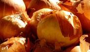 Allium cepa (Küchenzwiebel)