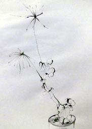 Geranie, Zeichnung, 40 x 60 cm