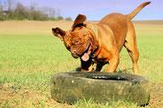 Hundehalterhaftpflicht, Tierhalter