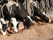 Crédit Photo Chambre Régionale d'Agriculture de Bretagne
