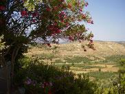 Mesara vallei (foto: M Heirman)