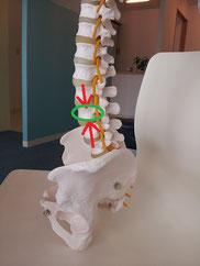骨粗鬆症の腰痛
