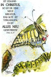 Verwandlung Raupe, Schmetterling