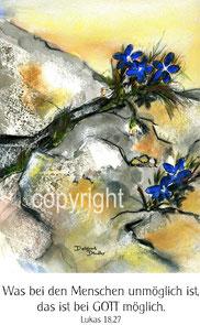 Blumen zwischen Steinen