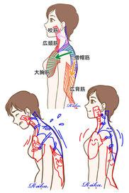 筋肉の引っ張り合い イラスト 無料