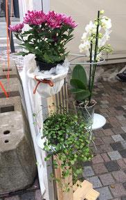 Affaldssortering til et skab med billigt affaldssortering system Flower i Ålborg, her som planteholder