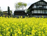 スローライフ田舎暮らしに花が咲く
