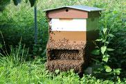 La ruche dans le jardin