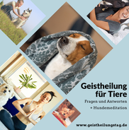 Geistheilung bei Tieren, Hundemeditation