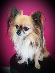 Malu - unser Salonhund in Ratingen bei LUXserious :)
