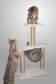 Лазилка для кошек