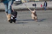 ハピーグループレッスン 犬 写真