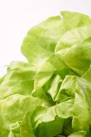 野菜レタス写真