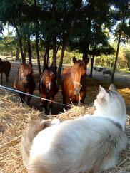 Quand chamalow raconte des histoires aux poneys.....!