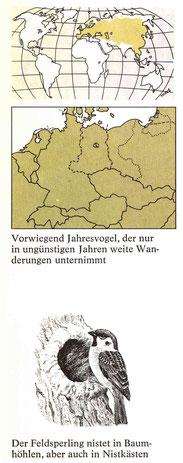 BiHU Vogelführer Feldsperling Natur