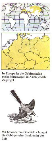 BiHU Vogelführer Gebirgsstelze Natur