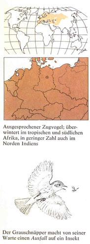 BiHU Vogelführer Grauschnäpper Natur