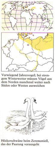 BiHU Vogelführer Höckerschwan Natur