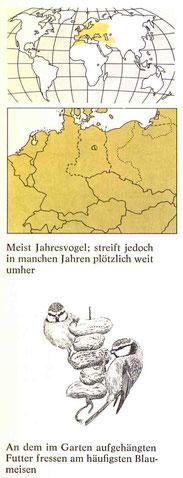 BiHU Vogelführer Blaumeise Natur