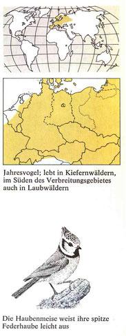 BiHU Vogelführer Haubenmeise Natur